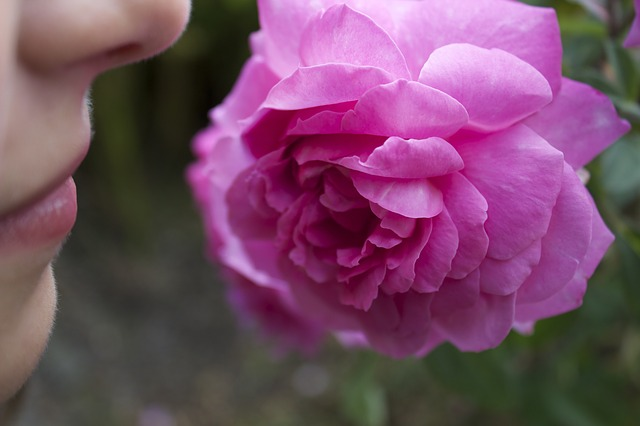 rose-177955_640